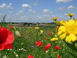 fleurs et belle nature